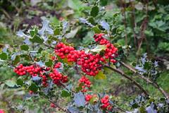 2417 (Tony Gillon) Tags: autumn2019 autumn october october2019 greatermanchester peakforestcanal