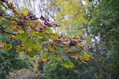 2430 (Tony Gillon) Tags: autumn2019 autumn october october2019 greatermanchester peakforestcanal
