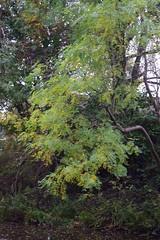 2436 (Tony Gillon) Tags: autumn2019 autumn october october2019 greatermanchester peakforestcanal