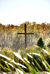 #cross #fall #trees (marlene-uhrig) Tags: cross fall trees