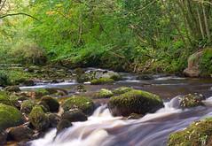 Woodland Sream No3 - Autumn (sineid2009) Tags: woodland stream leaves fall autimn wicklow ireland