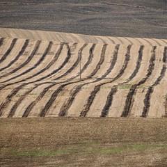 One (gicol) Tags: one single uno solo singolo solitario palo pole campo rurale field grano trigo wheat agricoltura murge puglia lucania apulia burning bruciato burnt quemado landscape paisaje paesaggio collina hill monte italy italia