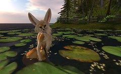 Fennec_Mesh_One_Piece 12 (Corgi-boobs) Tags: furry secondlife fennec fox onepieceswimsuit swimsuit