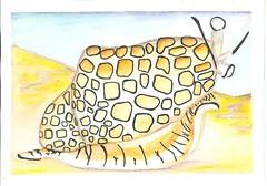 SIE Animals of the sea - Handmade Postcard (Rocky_Beach) Tags: swapbot mailart happymail handmadepostcard postcard snail watercolour