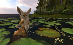 Fennec_Mesh_One_Piece 2 (Corgi-boobs) Tags: furry secondlife fennec fox onepieceswimsuit swimsuit