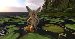 Fennec_Mesh_One_Piece 4 (Corgi-boobs) Tags: furry secondlife fennec fox onepieceswimsuit swimsuit
