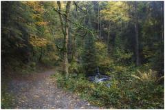 Ravenna Gorge /Ravenna Schlucht im Herbst (Atrista ) Tags: autumn blackforest canon canonrf24105f4lisusm eosr forest herbst ravenna ravennagorge ravennaschlucht schwarzwald wald woodland