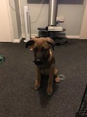 Photo of Loki 20/10/2019