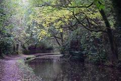 2431 (Tony Gillon) Tags: autumn2019 autumn october october2019 greatermanchester peakforestcanal