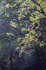 2432 (Tony Gillon) Tags: autumn2019 autumn october october2019 greatermanchester peakforestcanal