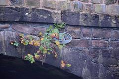 2441 (Tony Gillon) Tags: autumn2019 autumn october october2019 greatermanchester peakforestcanal