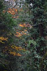 2445 (Tony Gillon) Tags: autumn2019 autumn october october2019 greatermanchester peakforestcanal