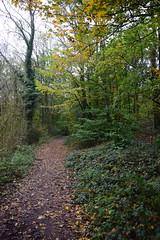 2446 (Tony Gillon) Tags: autumn2019 autumn october october2019 greatermanchester peakforestcanal