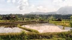 this is Bali (keulefm3) Tags: 2009 bali urlaub thebestofmimamorsgroups