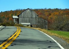 On The Bend (Diane Marshman) Tags: barn building old farm weathered gray barnboards wood siding boards milkhouse metal roof farming vintage daysgonepast autumn fall mountain trees foliage colors orange red yellow green leaves grass pavement white lines rural setting scene pa pennsylvania nature