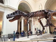 Sue, tyrannosaurus rex, Field Museum (Mulligan Stu) Tags: fieldmuseum tyrannosaurusrex sue dinosaur