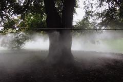 vaporwave beech (HyoTsuk) Tags: trees water cloud art landart normandy jumieges abbey park landscape france light soil machine