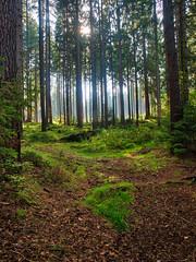Waldidylle (Naturportal) Tags: panasonic dmcgx8 olympus m1240mm f28 wald forest bäume trees natur nature
