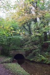 2403 (Tony Gillon) Tags: autumn2019 autumn october october2019 greatermanchester peakforestcanal