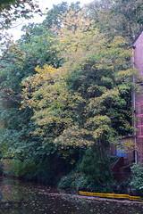 2410 (Tony Gillon) Tags: autumn2019 autumn october october2019 greatermanchester peakforestcanal
