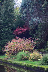 2414 (Tony Gillon) Tags: autumn2019 autumn october october2019 greatermanchester peakforestcanal