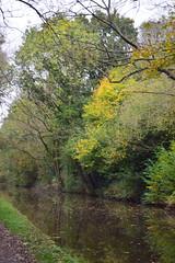 2425 (Tony Gillon) Tags: autumn2019 autumn october october2019 greatermanchester peakforestcanal