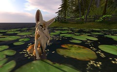 Fennec_Mesh_One_Piece 3 (Corgi-boobs) Tags: furry secondlife fennec fox onepieceswimsuit swimsuit