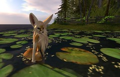 Fennec_Mesh_One_Piece 9 (Corgi-boobs) Tags: furry secondlife fennec fox onepieceswimsuit swimsuit