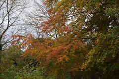 2438 (Tony Gillon) Tags: autumn2019 autumn october october2019 greatermanchester peakforestcanal