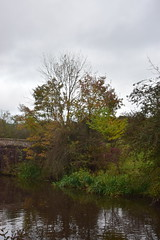 2440 (Tony Gillon) Tags: autumn2019 autumn october october2019 greatermanchester peakforestcanal