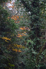 2444 (Tony Gillon) Tags: autumn2019 autumn october october2019 greatermanchester peakforestcanal