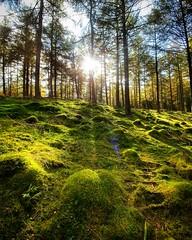 Photo of #forest near #Dunkeld #autumn #Perth #Scotland #nature #sunshine #trees