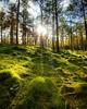 #forest near #Dunkeld #autumn #Perth #Scotland #nature #sunshine #trees