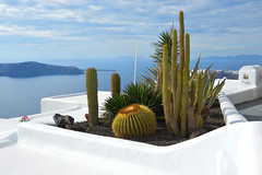 Imerovigil, Santorini (Seventh Heaven Photography - (Travel)) Tags: imerovigil santorini island greece greek caldera cyclades aegean cactus cacti water sea view nikond3200 volcano garden display blue white plant