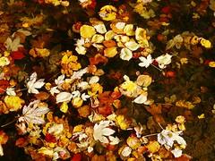 Herbst autumn 2019 (Martinus VI) Tags: herbst automne autumn fall martinus6 martinus6xy martinus martinusvi hillside schweiz suisse switzerland suiza svizzera swiss kanton de canton bern berne berna berner bernese