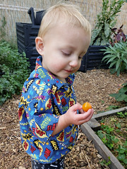Contemplating a tomato (quinn.anya) Tags: eliza toddler tomato thinking garden