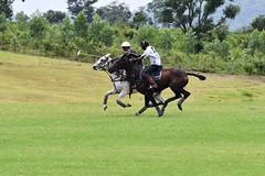 equestrian (21)