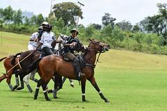 equestrian (1)