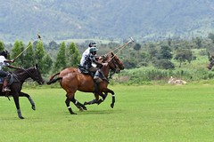 equestrian (22)