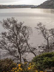Castle and Bay of Urquhart, Loch Ness, in Spring. (Scotland by NJC.) Tags: lakes lochs reservoirs waters meres tarns ponds pool lagoon lago 湖 jezero see λίμνη jezioro lac озеро hill تَلّ colina 小山 brdo kopec bakke forhøjning landskabet heuvel mäki 丘 언덕 ås wzgórze deal холм backe castle acropolis citadel donjon fort قَلْعَة castelo 城堡 dvorac hrad slot kasteel castillo linna château schloss κάστρο castello borg zamek budynek castel замок жилище slott lochness urquhartcastle greatglen scotland