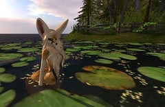 Fennec_Mesh_One_Piece 6 (Corgi-boobs) Tags: furry secondlife fennec fox onepieceswimsuit swimsuit