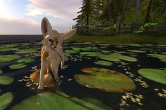 Fennec_Mesh_One_Piece 10 (Corgi-boobs) Tags: furry secondlife fennec fox onepieceswimsuit swimsuit