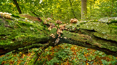 Moos-Grün (KaAuenwasser) Tags: stamm moose moos flechten wald grün holz pilz pilze baum bäume natur