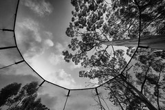 Life in your new world (Keith Midson) Tags: trampoline tree kingston tasmania netting sky clouds canon sigma 1224mm