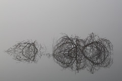 Branches on the Water (KateMo1989) Tags: branches water lake iowa nature foggy morning reflection