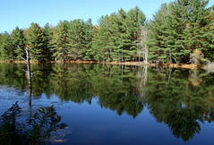 Quiet Place (Diane Marshman) Tags: pond water blue sky reflections pine trees pines tree grass quiet calm setting autumn fall pa pennsylvania nature rural