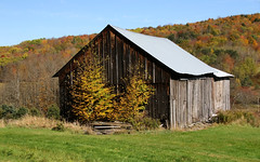 Back In The Day (Diane Marshman) Tags: old building barn structure metal roof weathered black gray boards siding barnboards autumn fall foliage season mountain hill trees pines grass green yellow orange red colors scene scenery pa pennsylvania nature
