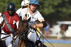 equestrian (12)