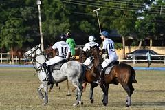 equestrian (11)