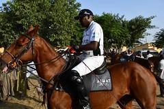 equestrian (9)